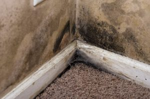 mold damage chippewa falls, Mold Damage Cleanup Chippewa Falls,